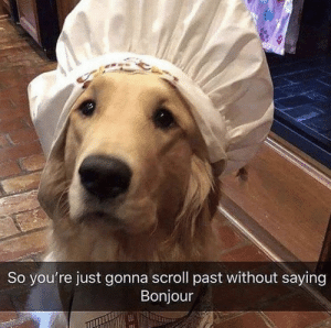 Memes, 🤖, and Bonjour: So you're just gonna scroll past without saying  Bonjour https://t.co/vRpCCs3S3s