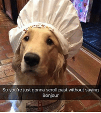 Memes, Sorry, and France: So you're just gonna scroll past without saying  Bonjour Sorry my French is a little ruff 🐶 bonjour yyc dog hi france baguette