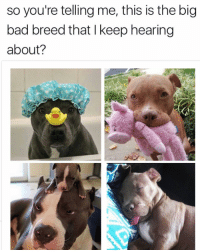 😂😂😂Lol - - - - - 420 memesdaily Relatable dank MarchMadness HoodJokes Hilarious Comedy HoodHumor ZeroChill Jokes Funny KanyeWest KimKardashian litasf KylieJenner JustinBieber Squad Crazy Omg Accurate Kardashians Epic bieber Weed TagSomeone hiphop trump rap drake: so you're telling me, this is the big  bad breed that keep hearing  about? 😂😂😂Lol - - - - - 420 memesdaily Relatable dank MarchMadness HoodJokes Hilarious Comedy HoodHumor ZeroChill Jokes Funny KanyeWest KimKardashian litasf KylieJenner JustinBieber Squad Crazy Omg Accurate Kardashians Epic bieber Weed TagSomeone hiphop trump rap drake