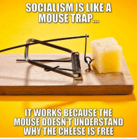 Memes, Trap, and Free: SOCIALISMIS LIKEA  MOUSE TRAP  T WORKS BECAUSE THE  MOUSE DOESN'T UNDERSTAND  WHY THE CHEESE IS FREE (GC)