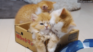 Perfect Loop Gif, Net, and Kitty: SoEpic.net Kitty kisses