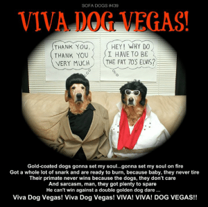 """While you wait for our """"Behind the scenes - the making of a Sofa Dogs episode"""" - today's HINDENBARK episode, here is one of our Elvis episodes to mark his passing.  (I don't like interrupting our planned schedule for today but viewership is way down so who cares, right?): SOFA DOGS # 439  VIVA DOG VEGAS!  HEY! WHY DO  I HAVE TO BE  THE FAT 70S ELVIS?  THANK YOU,  THANK YOU  VERY MUCH  Gold-coated dogs gonna set my soul...gonna set my soul on fire  Got a whole lot of snark and are ready to burn, because baby, they never tire  Their primate never wins because the dogs, they don't care  And sarcasm, man, they got plenty to spare  He can't win against a double golden dog dare.  Viva Dog Vegas! Viva Dog Vegas! VIVA! VIVA! DOG VEGAS!! While you wait for our """"Behind the scenes - the making of a Sofa Dogs episode"""" - today's HINDENBARK episode, here is one of our Elvis episodes to mark his passing.  (I don't like interrupting our planned schedule for today but viewership is way down so who cares, right?)"""