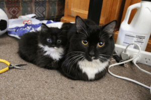 sofluffysoyummy: A cat and a lowercase cat : sofluffysoyummy: A cat and a lowercase cat