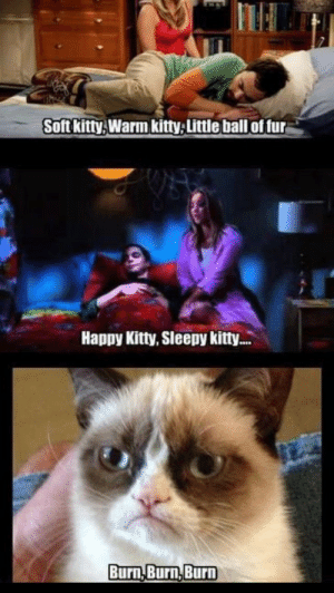 Cat Balls Meme Best Of the Big Bang theory soft Kitty Grumpy Cat ...: Soft kitty, Warm kitty,Little ball of fur  Happy Kitty, Sleepy kitt..  Burn,Burn,Burn Cat Balls Meme Best Of the Big Bang theory soft Kitty Grumpy Cat ...