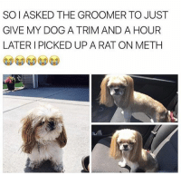Gave it some character 😂😂😂😂 - - FOLLOW: @whypree_tho_vip & @whypree_tv ⚠️ for more 🆘🔥‼️: SOI ASKED THE GROOMER TO JUST  GIVE MY DOG A TRIM AND A HOUR  LATER I PICKED UP A RAT ON METH Gave it some character 😂😂😂😂 - - FOLLOW: @whypree_tho_vip & @whypree_tv ⚠️ for more 🆘🔥‼️
