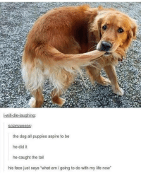 """Life, Puppies, and Tumblr: solarsweeps  the dog all puppies aspire to be  he did it  he caught the tail  his face just says """"what am i going to do with my life now <p><a href=""""http://memehumor.net/post/174359659988/the-dog-all-puppies-aspire-to-be"""" class=""""tumblr_blog"""">memehumor</a>:</p>  <blockquote><p>The dog all puppies aspire to be</p></blockquote>"""