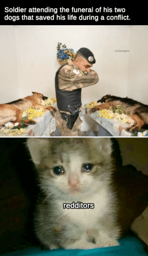 Pay your respects by Mixodes MORE MEMES: Soldier attending the funeral of his two  dogs that saved his life during a conflict.  u/MIXODES  redditors Pay your respects by Mixodes MORE MEMES