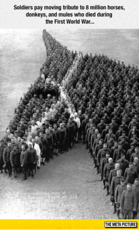 epicjohndoe:  Soldiers Paying Tribute: Soldiers pay moving tribute to 8 million horses,  donkeys, and mules who died during  the First World War...  THE META PICTURE epicjohndoe:  Soldiers Paying Tribute