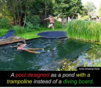 Memes, Pool, and Trampoline: Some Amazing Facts  A pool designed as a pond with a  trampoline instead of a diving board This is amazing 😍☀🏡