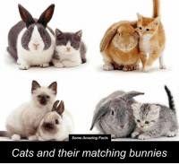 Bunnies, Cats, and Memes: Some Amazing Facts  Cats and their matching bunnies