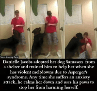 Aspergers: Some Amazing Facts  Danielle Jacobs adopted her dog Samason from  a shelter and trained him to help her when she  has violent meltdowns due to Asperger's  syndrome. Any time she suffers an anxiety  attack, he calms her down and uses his paws to  stop her from harming herself.