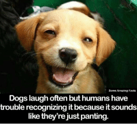 This warms my heart <3: Some Amazing Facts  Dogs laugh often but humans have  trouble recognizing it because itsounds  like they're just panting. This warms my heart <3