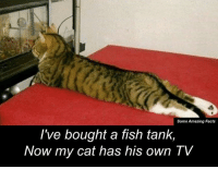 tank: Some Amazing Facts  I've bought a fish tank,  Now my cat has his own TV