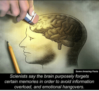 Brain: Some Amazing Facts  Scienists say the brain purposely forgets  certain memories in order to avoid information  overload, and emotional hangovers