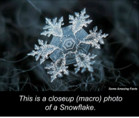 closeup: Some Amazing Facts  This is a closeup macro) photo  of a Snowflake.
