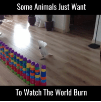 Dank, 🤖, and Via: Some Animals Just Want  ar  To Watch The World Burn This cockatoo doesn't give a sh*t 😂😂  Via Newsflare