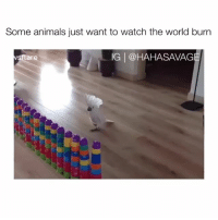 Animals, Crying, and Watch: Some animals just want to watch the world burn  IG @HAHASAVAG  ar IM CRYING💀😹