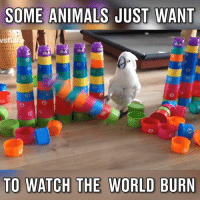 Dank, 🤖, and Cockatoo: SOME ANIMALS JUST WANT  VS  TO WATCH THE WORLD BURN This cockatoo is an absolute savage.