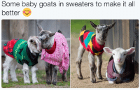 """Animals, Target, and Tumblr: Some baby goats in sweaters to make it all  bettero <p><a href=""""http://babyanimalgifs.tumblr.com/"""" target=""""_blank"""">baby <b>animals</b> blog</a></p>"""