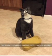 "Cats, Tumblr, and Birds: Some cats bring home mice or birds, ours brings home sponges <p><a class=""tumblr_blog"" href=""http://disgustinganimals.tumblr.com/post/107940904710/this-is-what-im-talking-about-what-a-champ"">disgustinganimals</a>:</p><blockquote> <p>this is what i'm talking about what a champ</p> </blockquote>"