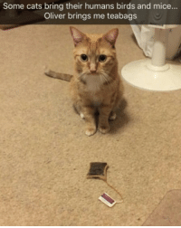 9gag, Cats, and Memes: Some cats bring their humans birds and mice...  Oliver brings me teabags Oliver is a true English cat. Follow @9gag to laugh more. 9gag cat tea