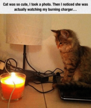 Some cats just want to watch the world burn by randomdooooood MORE MEMES: Some cats just want to watch the world burn by randomdooooood MORE MEMES