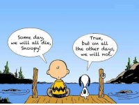 """<p>Found this on /r/getmotivated figured it would fit in nicely here! via /r/wholesomememes <a href=""""http://ift.tt/2x3cgG9"""">http://ift.tt/2x3cgG9</a></p>: Some day,  wwe will all die  Snoopy  True,  but on all  the other days,  e will not <p>Found this on /r/getmotivated figured it would fit in nicely here! via /r/wholesomememes <a href=""""http://ift.tt/2x3cgG9"""">http://ift.tt/2x3cgG9</a></p>"""