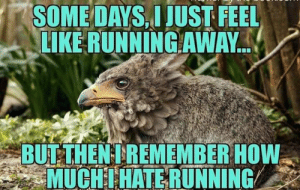 Lol, Memes, and Running: SOME DAYS.I JUST FEEL  LIKE RUNNINGAWAY.  i BUT THEN!REMEMBER HOW  MUCHIHATE RUNNING Some days I just feel like running away. Then I remember how much I hate running    LOL