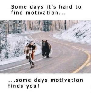 Bear, Haha, and Can: Some days it's hard to  find motivation...  ...some days motivation  finds you! racing with a bear, what can stop you haha