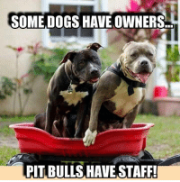 Some dogs have owners, pit bulls have staff     #pitbulls: SOME DOGS HAVE OWNERS.  PITBULLS HAVE STAFF! Some dogs have owners, pit bulls have staff     #pitbulls