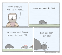 College, Kids, and Strong: SOME INSECTS  ARE SO STRONG  LOOK AT THIS BEETLE  HIS KIDS ARE GOING  AWAY TO COLLEGE  BUT HE DOES  NOT CRY  poorlydrawnlines.com <p>Some Insects Are So Strong</p>