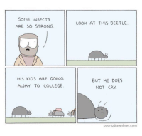 """<p>Strong Beetles via /r/wholesomememes <a href=""""http://ift.tt/2uoUy0k"""">http://ift.tt/2uoUy0k</a></p>: SOME INSECTS  LOOK AT THIS BEETLE  ARE SO STRONG  HIS KIDS ARE GOING  AWAY TO COLLEGE  BUT HE DOES  NOT CRY  poorlydrawnlines.com <p>Strong Beetles via /r/wholesomememes <a href=""""http://ift.tt/2uoUy0k"""">http://ift.tt/2uoUy0k</a></p>"""