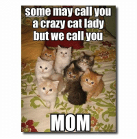 Crazy, Memes, and 🤖: some may call you  a crazy cat lady  but we call you  MOM <3