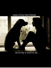 Friends, Memes, and Best: some of my best friends  never say a word to me Silence is Golden  🐕 #friendship
