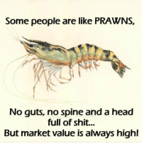 Facts, Head, and Memes: Some people are like PRAWNS,  No guts, no spine and a head  full of shit...  But market value is always high! Facts