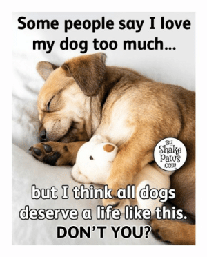 Dogs, Life, and Love: Some people say I love  my dog too much...  BY  Shake  Paws  .Com  but I think all dogs  deserve a life like this.  DON'T YOU? I agree! 🐾