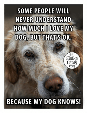 ❤️: SOME PEOPLE WILL  NEVER UNDERSTAND  HOW MUCHI LOVE MY  DOG, BUT THATSOK.  By  Shake  Paws  com  BECAUSE MY DOG KNOWS! ❤️