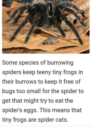 Cats, Spider, and Free: Some species of burrowing  spiders keep teeny tiny frogs in  their burrows to keep it free of  bugs too small for the spider to  get that might try to eat the  spider's eggs. This means that  tiny frogs are spider cats. That spider has a pet frog