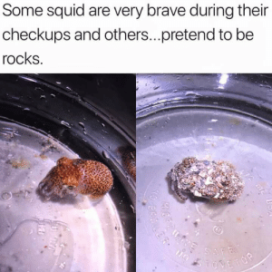 Brave, Squid, and Check: Some squid are very brave during their  checkups and others...pretend to be  rocks Little squids getting a check up