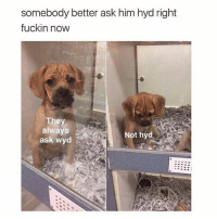 Dogs, Funny, and Memes: somebody better ask him hyd right  fuckin now  They  always  ask wyd  Not hyd @dogsbeingbasic has the best dogs memes