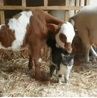Target, Tumblr, and Blog: somecutething: An unlikely friendship