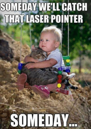 Omg, Tumblr, and Blog: SOMEDAY WE'LL' CATCH  THATLASER POINTER  SOMEDAY omg-images:Kid Consoling His Cat