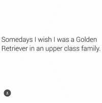 Butt, Family, and Memes: Somedays I wish I was a Golden  Retriever in an upper class family. Either that or be a tiny bead of sweat running down Sofia Vergara's butt crack and into her majestic fart box during a Bikram yoga class.