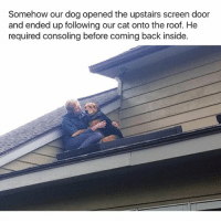 Funny, Back, and Dog: Somehow our dog opened the upstairs screen door  and ended up following our cat onto the roof. He  required consoling before coming back inside. 😂😂😂 | More 👉 @miinute