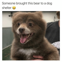Funny, Tbh, and Yeah: Someone brought this bear to a dog  shelter Yeah I would've done the same tbh