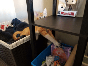 Someone found where the dry food is kept.: Someone found where the dry food is kept.