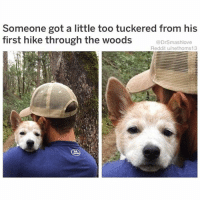 "Bad, Be Like, and Bitch: Someone got a little too tuckered from his  first hike through the woods  @DrSmashlove  Reddit u/nethoms13 In addition to this bb being adorable as hell, this post is a reminder that ""tuckered"" is an amazing word. If a fvckboy named Mike hit u up at 11:18 pm like ""u up"" u can be like ""hey Mike my bad I'm tuckered"" and then Mike like ""what is that mean like u r already tucked in let me untuck u lol"" and then u can be like ""Mike I'm gonna be honest with you, in addition to your PP game being only good but not great, your illiteracy is literally exhausting. I need more. In one of those two areas. I don't expect your PP game to magically make you as wonderful as my ex was overnight. I also don't expect you to learn the SAT words you didn't learn when you were drinking yourself stupid with your hockey buddies so, absent any improvement in intellectual (or sexual) stimulation Mike I'm afraid this entire relationship is tuckered. Google it 💕."" Mike: ""wow lol ur a bitCH"" (side note illiterate people always be capitalizing randomly lol). You: ""bye Mike"". THEN BLOCK ON ALL PLATFORMS BLESS UPPINGTON 😍😂😂😂"