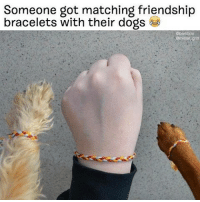 omg (@bark @mister_griff): Someone got matching friendship  bracelets with their dogs omg (@bark @mister_griff)
