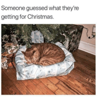 Christmas, Hope, and Box: Someone guessed what they're  getting for Christmas. Hope they saved the box via /r/wholesomememes https://ift.tt/2SdgmFk