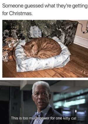 awesomacious:  And what did it cost?: Someone guessed what they're getting  for Christmas.  This is too much power for one kitty cat awesomacious:  And what did it cost?